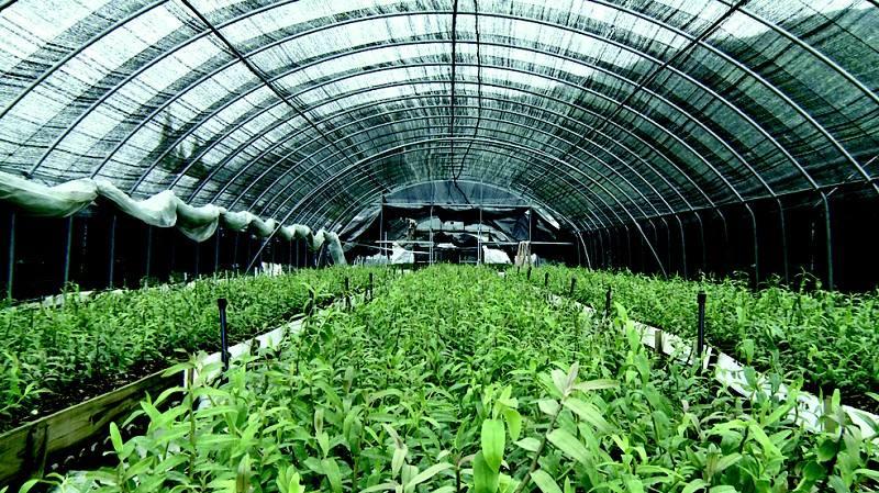 农业种植网|农业种植