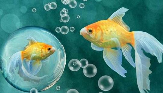 【鱼缸养鱼注意事项】养鱼的注意事项