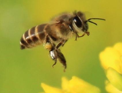 【蜜蜂夏季管理技术video】夏季蜜蜂管理技术
