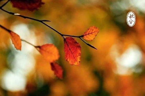【秋分吃什么食物】秋分吃什么