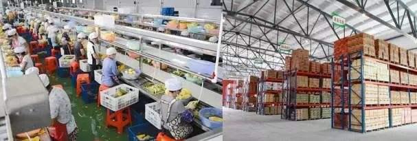 [农产品税率2019]2019年农产品加工哪些项目有补贴