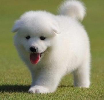 【养宠物狗卖赚钱吗】养宠物狗赚钱吗大全