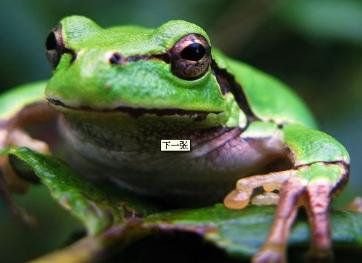 养林蛙利润怎么样|养林蛙的前景