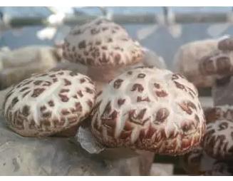 【花菇一般多少钱一斤】花菇价格多少钱一斤