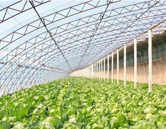 大棚蔬菜种植国家补贴|大棚蔬菜种植成本多少