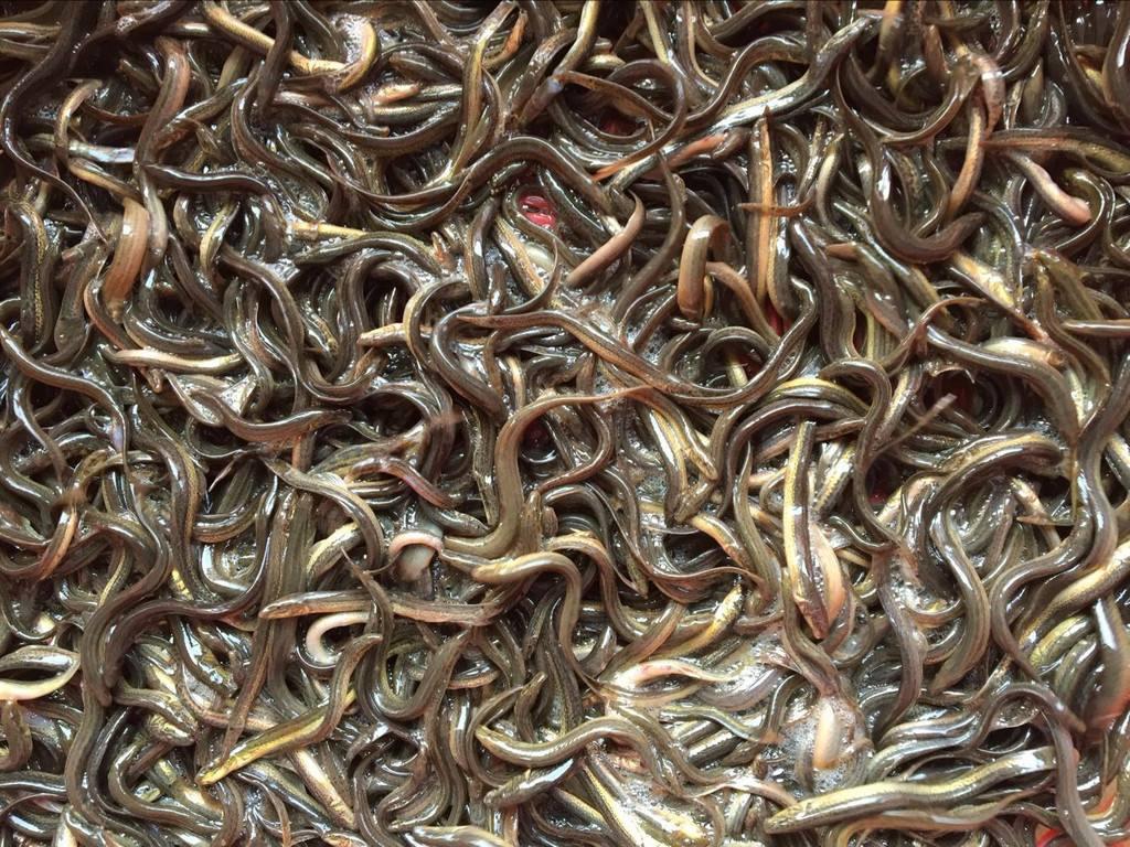 泥鳅养殖方法